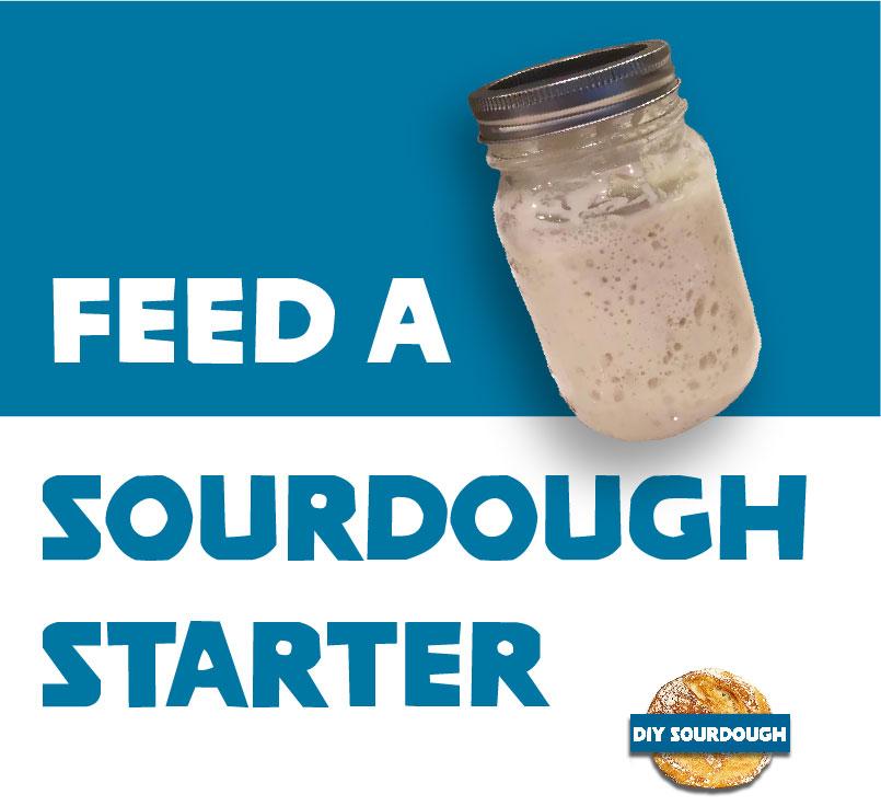 Feed a sourdough starter